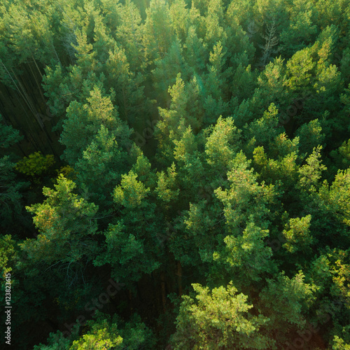 Poster Forets Beautiful panoramic photo over the tops of pine forest. Aerial view. From above. Picture taken using the copter. Top view