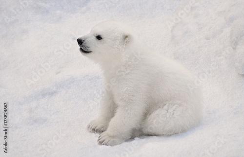 In de dag Ijsbeer Белый медвежонок.
