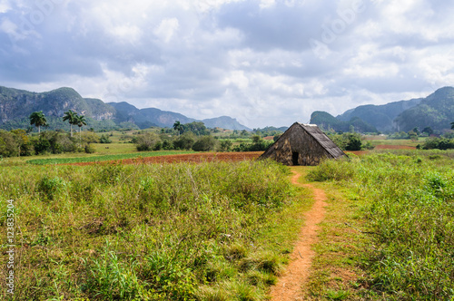 Fotografie, Obraz  Small hut in Vinales Valley, Cuba