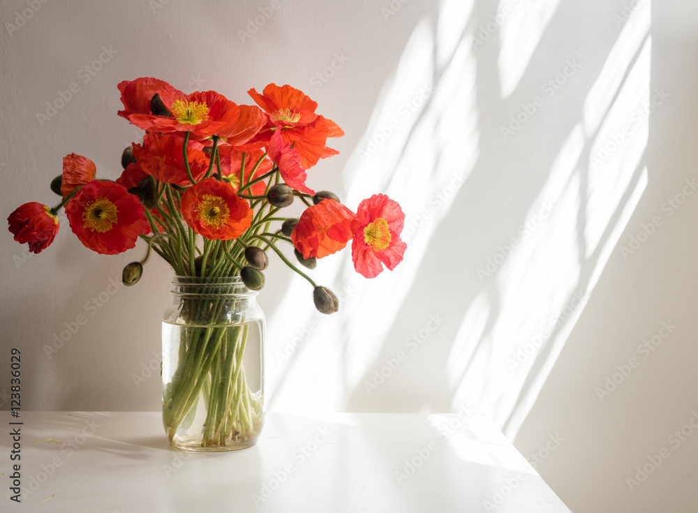 Red poppies in glass jar on white table against white wall with sunlight