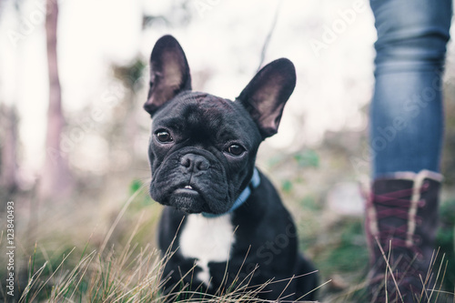 Woman enjoying with her French bulldog puppy in walk.