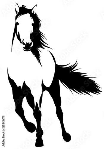 Fototapety, obrazy: black and white linear paint draw horse illustration