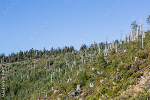 Fotografie, Obraz Sturmwurffläche, Orkan Lothar; Nationalpark Schwarzwald, Sommer