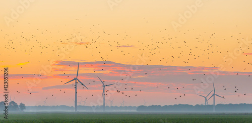 Wind turbines in a field at sunrise