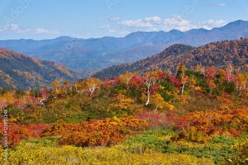 Foto op Plexiglas Crimson 大雪高原温泉 沼めぐりコースの紅葉