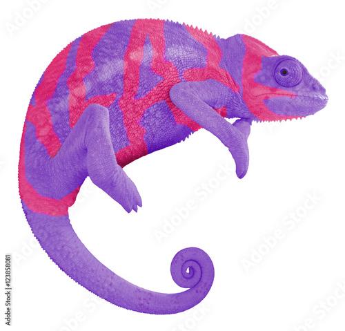 Staande foto Kameleon Colorful Chameleon Create Word