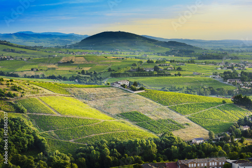 Brouilly hill and vineyards with morning lights in Beaujolais la Wallpaper Mural