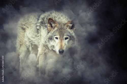 Photo  Wolf in smoke