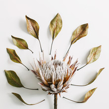 Protea Flower And Dry Leaves On A White Background