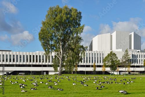 Flock of Barnacle geese (Branta leucopsis) on field on background of Finlandia Hall