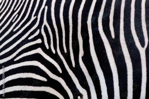 In de dag Zebra Zebra texturae pattern