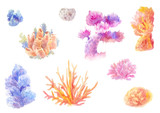 Сoral reef in watercolor. Set of hand-drawn seaweed
