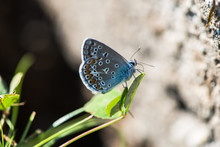 Amazing Blue Butterfly