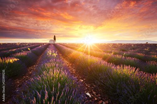 Tuinposter Lavendel Champ de lavande en Provence, France