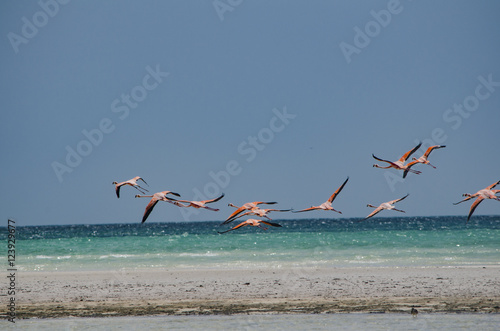 Keuken foto achterwand Retro Flamingos flying over the beach in Holbox