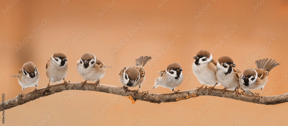 Photo  a lot of little funny birds sitting on a branch in Sunny weather
