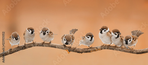 Foto op Canvas Vogel a lot of little funny birds sitting on a branch in Sunny weather