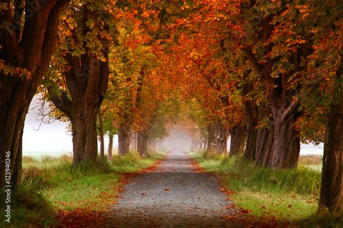 Photo Herbst