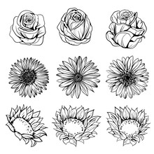Set Of Flowers Drawing