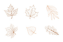 Vector Autumn Leaves Design El...