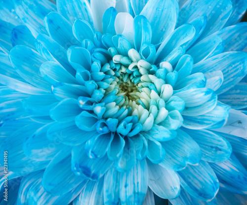Poster de jardin Dahlia Close up of blue flower aster details