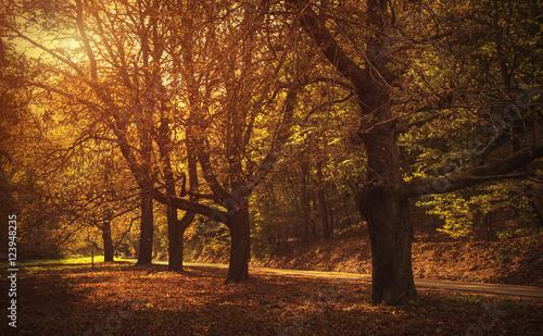 Aluminium Prints Autumn Road in beautiful autumn forest