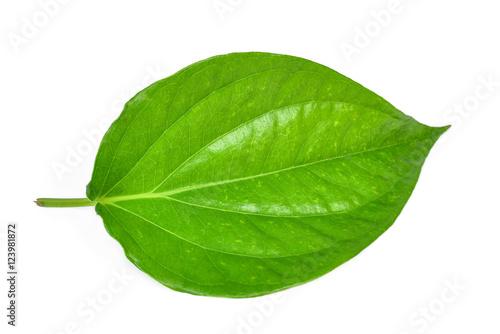 Green betel leaf heart shape isolated on white Wallpaper Mural