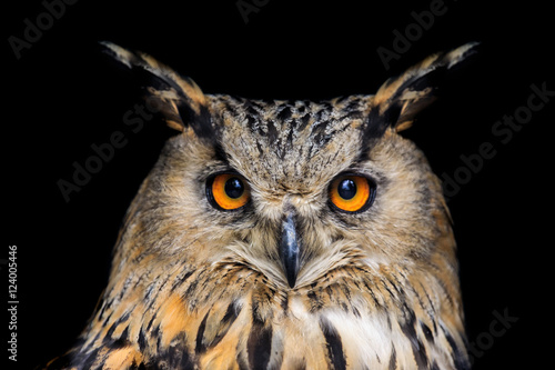 Spoed Foto op Canvas Uil Portrait of eagle owl on black background