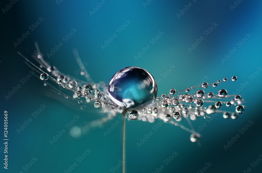 Fototapeta Beautiful dew drops on a dandelion seed macro. Beautiful soft light blue and violet background. Water drops on a parachutes dandelion on a beautiful blue. Soft dreamy tender artistic image form.