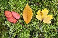 Foliage On The Ground