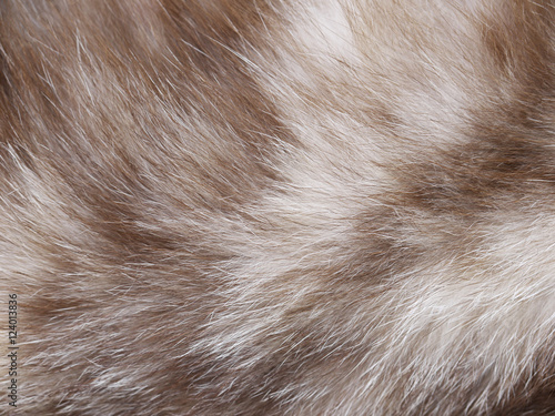 Photo sur Toile Les Textures Cat fur texture closeup
