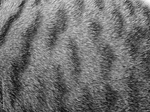 Photo sur Toile Les Textures Cat fur texture