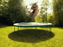 Moose On Trampoline