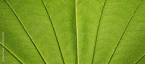 Photo leaf texture