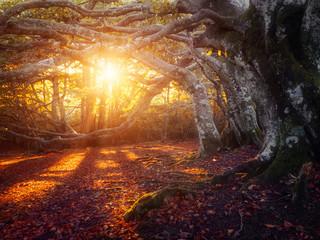 Fototapeta Forêt en automne
