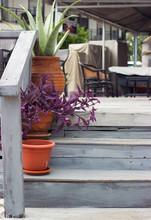 Detail Of A Aloe Vera And Purple Heart Plant In Flowerpots