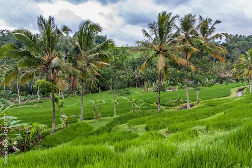 Foto op Aluminium Indonesië Bali rice terrace