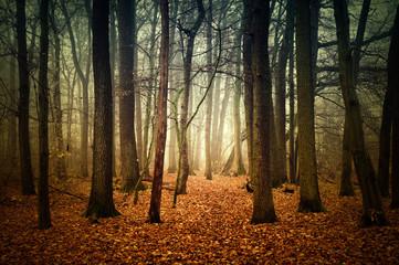 Fototapeta mystischer Wald im Herbst
