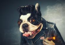 MC Dog