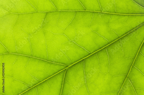Close Up Details Of A Green Leaf; Thunder Bay, Ontario, Canada