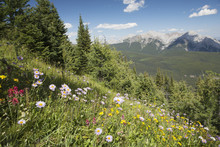 Wildflowers On Hill Side With Mountains And Valley In The Distance With Blue Sky And Clouds; Alberta, Canada