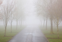 Trees Along A Road In The Morning Fog In A Park;Portland Oregon United States Of America