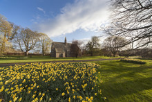 Daffodils In Bloom With St. Mary The Virgin Church In The Background; Etal, Northumberland, England