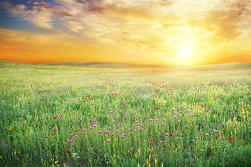 Obraz na Szkle Eko Spring meadow