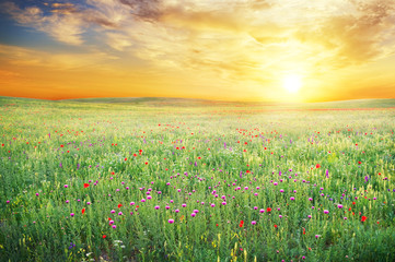 Fototapeta Eko Spring meadow