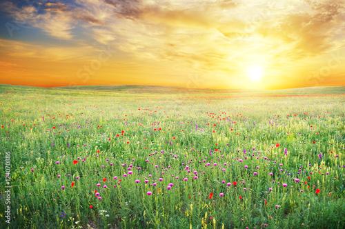 Canvas Print Spring meadow