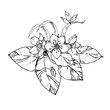 hand drawn ink floral ornament with flowers and leaves, beetle. vector eps 10