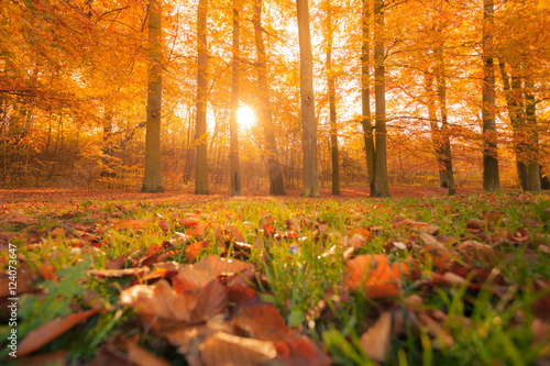 Autumn in park and forest Tablou Canvas