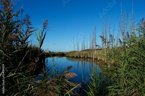 Fotografia, Obraz  Jersey Shore Marshes