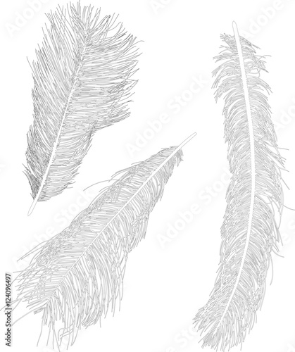 three ostrich feather sketches isolated on white